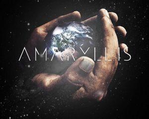 Amaryllis short